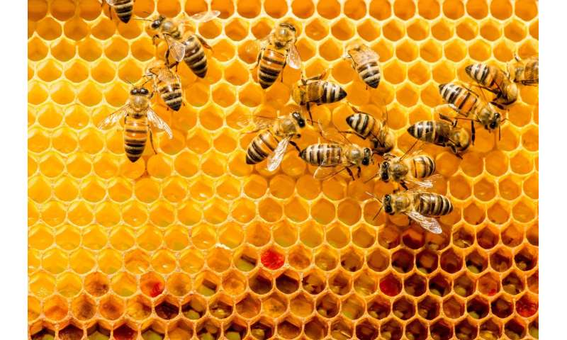 How better tests and legal deterrence could clean up the sticky mess left behind by fake honey row