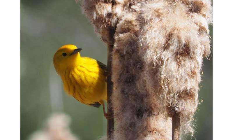 How bird genetics adapt to climate change