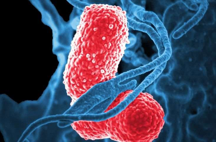 How competition and cooperation between bacteria shape antibiotic resistance