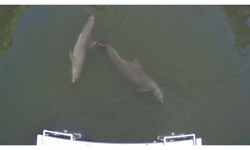 How dolphins learn to work together forrewards