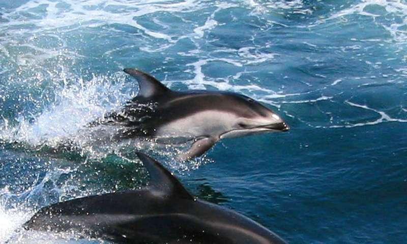 How do marine mammals avoid the bends?