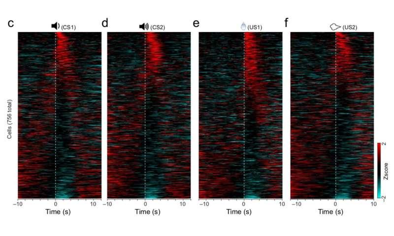 How the brain hears and fears