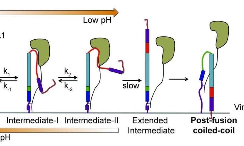 How the flu virus builds a better mousetrap