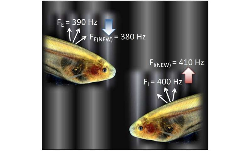 How to use limited bandwidth more efficiently? Think like a cave-dwelling fish