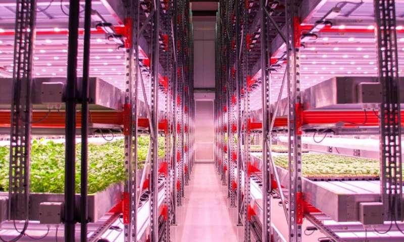 Cómo los agricultores urbanos están aprendiendo a cultivar alimentos sin suelo ni luz natural