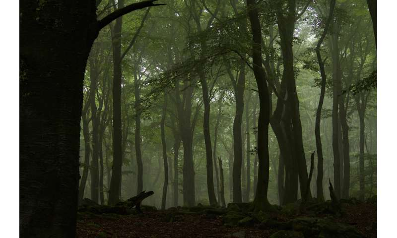 How we can get more out of our forests