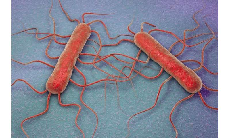 How we can prevent more Listeria deaths