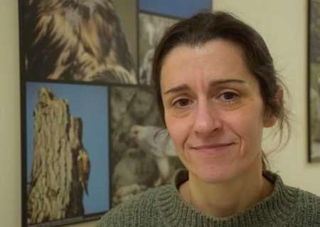 Humans behind majority of raptor deaths in Ontario, study finds
