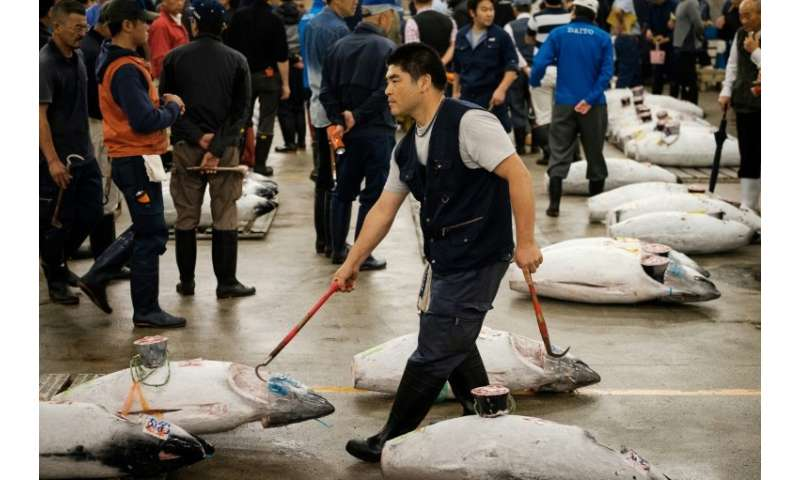 Hundreds of fresh and frozen tuna tagged with their weight and ports of origin were laid out in lines as veteran buyers in rubbe