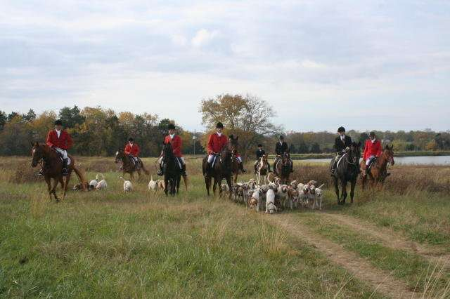 Hunting dogs may benefit from antioxidant boost in diet