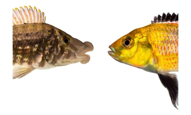 Hybridization boosts evolution