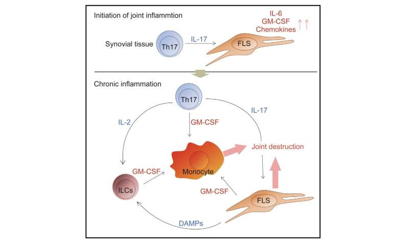 Igniting the rheumatoid arthritis flame through a cellular cascade