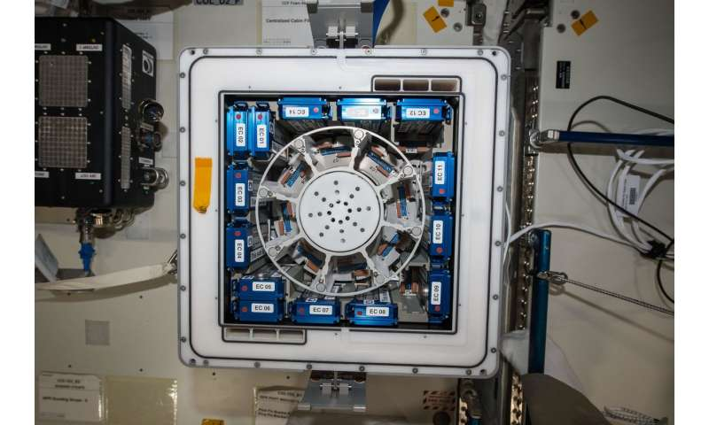 Image: Kubik on Space Station