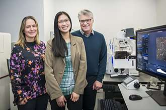 Imaging collaboration sheds new light on cancer growth