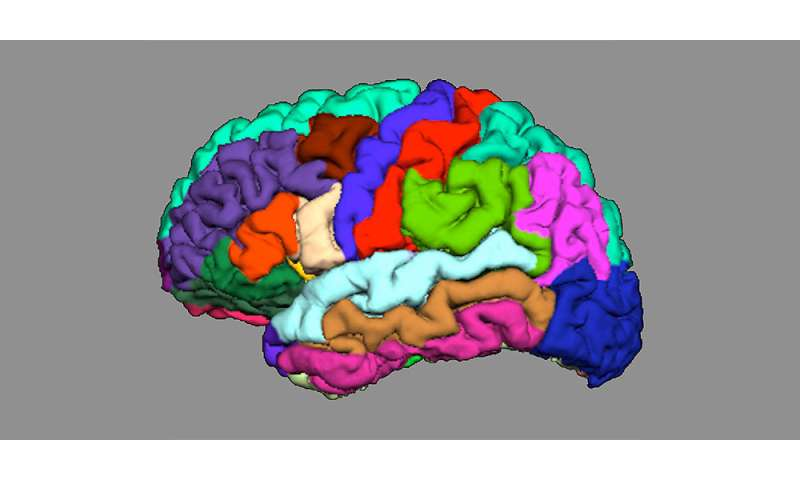 Indications of psychosis appear in cortical folding