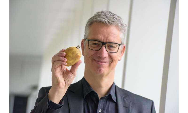 Information experts optimizing potato production