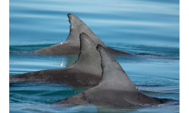 In male dolphin alliances, 'everybody knows your name'
