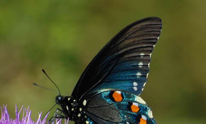 Insects coping with climate change