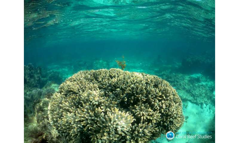 Internal control helps corals resist acidification