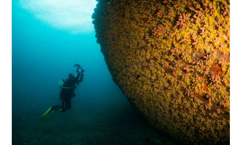 Invasive species of coral boasts amazing capacity for regeneration