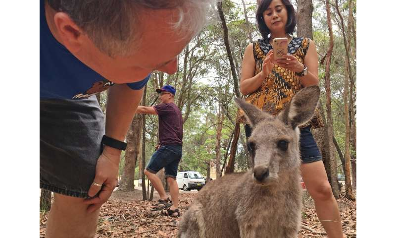 Is that selfie really worth it? Why face time with wild animals is a bad idea