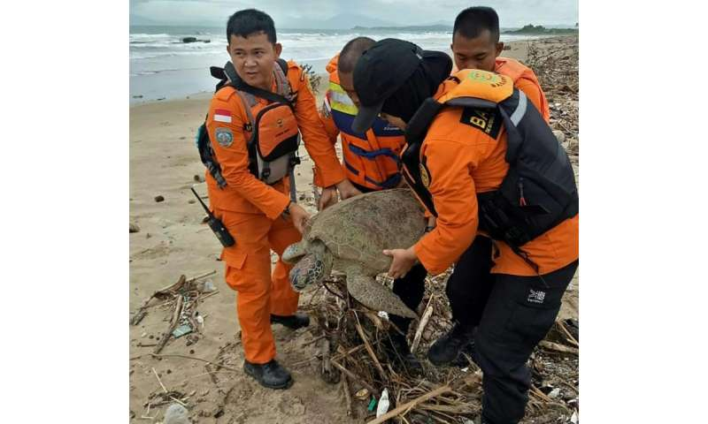 It took four staff to haul the giant sea turtle back to sea after it became trapped in a pile of marine trash in the wake of Ind