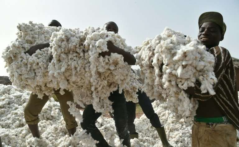 Ivory Coast hopes to become one of the top three African producers of cotton and among the top 10 worldwide