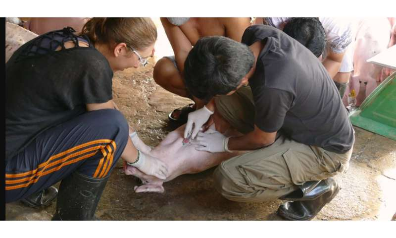 JE is transmitted to pigs as rapidly in Cambodian peri-urban areas as rural areas