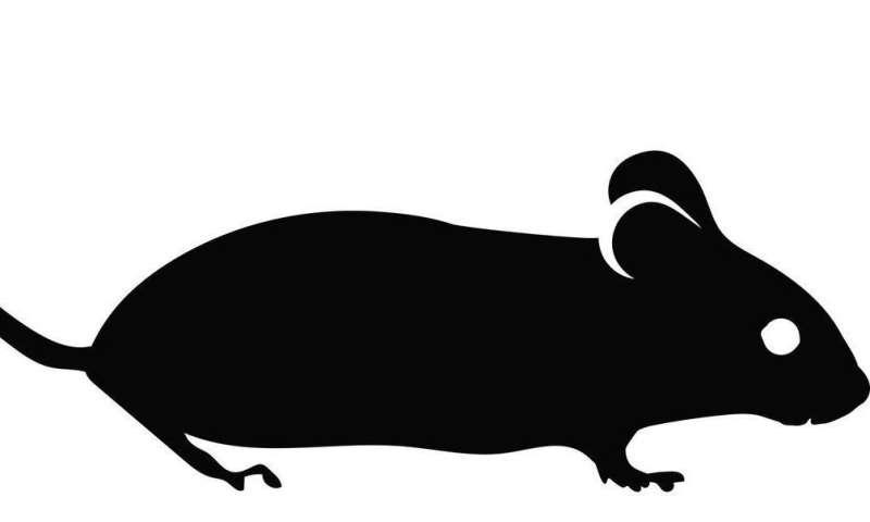 laboratory mice