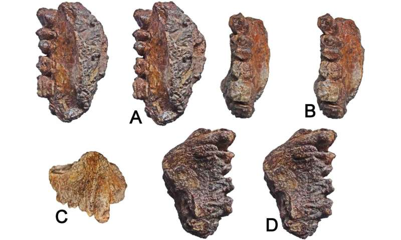 Late Miocene ape maxilla (upper jaw) discovered in western India