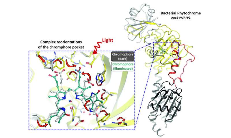 Light-induced changes in photosensory proteins