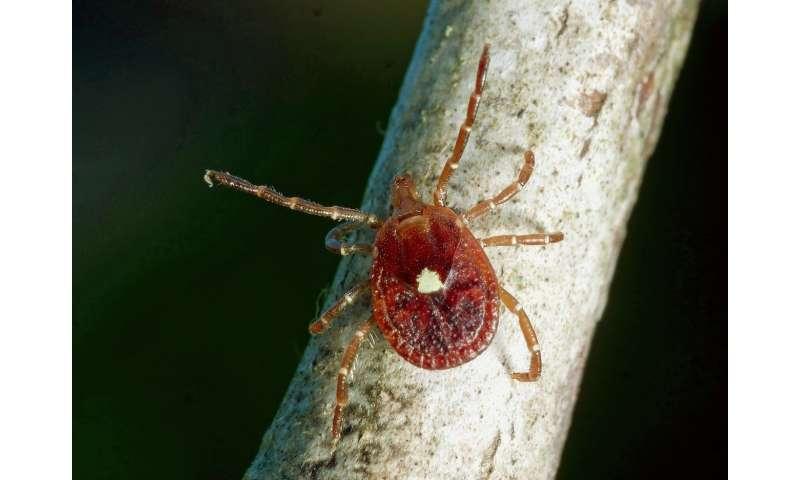 Lone star ticks not guilty in spread of Lyme disease