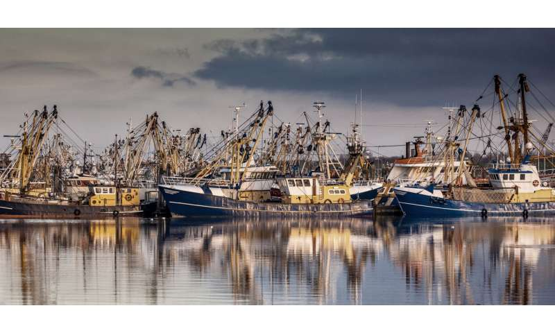 Loss of marine habitats is threatening the global fishing industry – new research