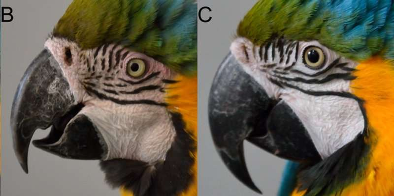 Macaws may communicate visually with blushing, ruffled feathers