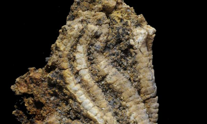 Major shift in marine life occurred 33 million years later in the South