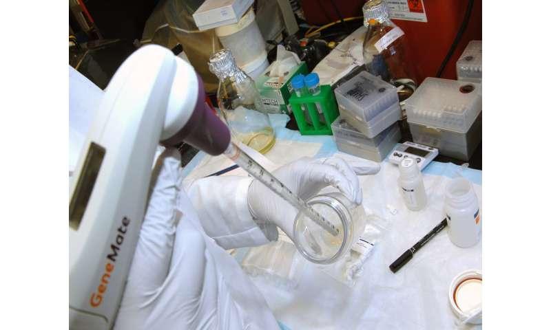 Making mice a tiny bit more human to study preterm birth