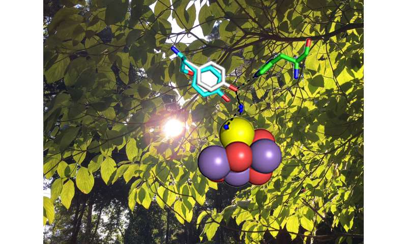Making the oxygen we breathe, a photosynthesis mechanism exposed