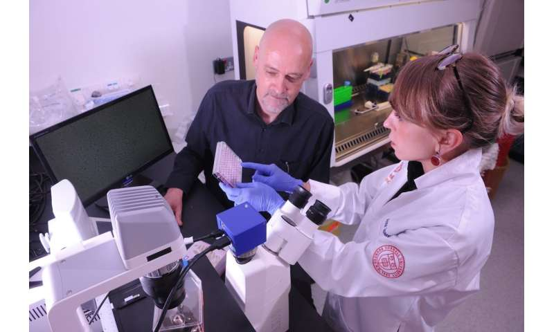 Malaria drug could make cancer treatments more effective