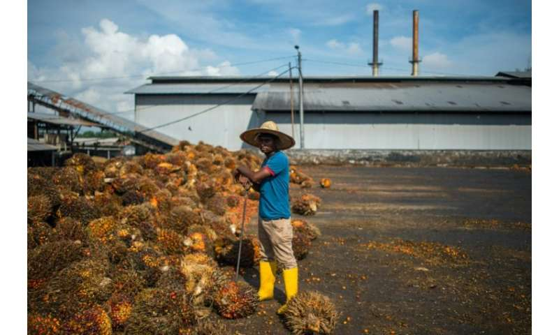 Malaysia and Indonesia are the world's top exporters of palm oil