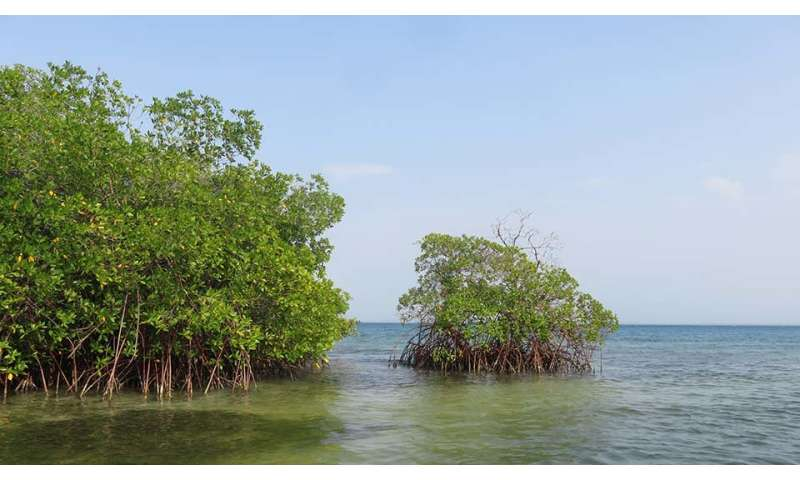 Mangroves can help countries mitigate their carbon emissions