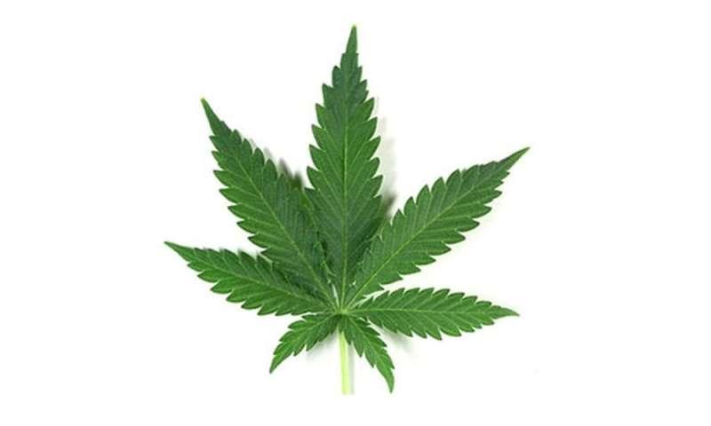 Marijuana legalization may reduce opioid use