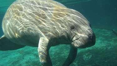 Marine mammals lack functional gene to defend against popular pesticide
