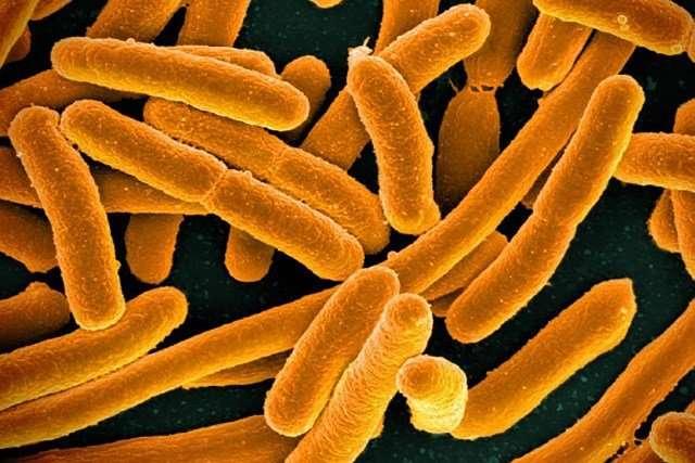 Microbial dark matter dominates Earth's environments