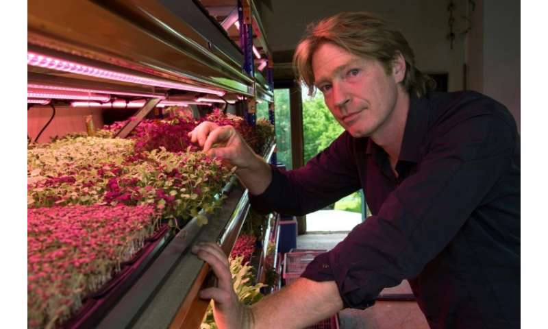Microgreens can exude the most startling flavours—mustard, wasabi, pepper, citrus, capers and even oysters—and in such high conc