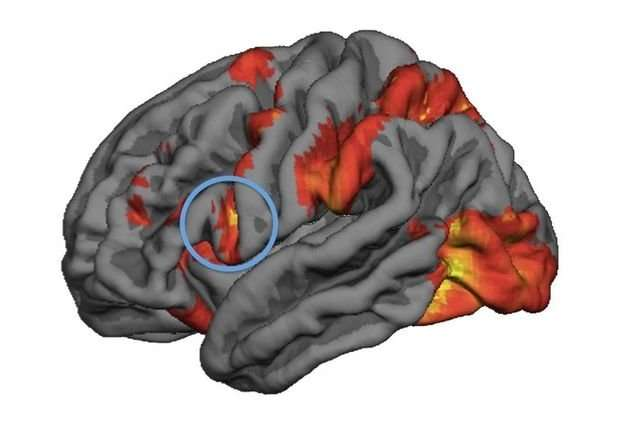 Mirror neuron activity predicts people's decision-making in moral dilemmas, study finds
