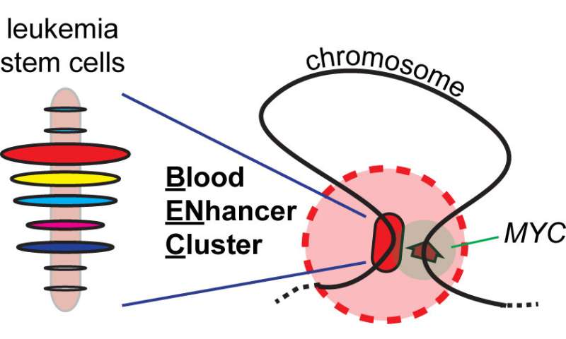 Modular gene enhancer promotes leukemia and regulates effectiveness of chemotherapy