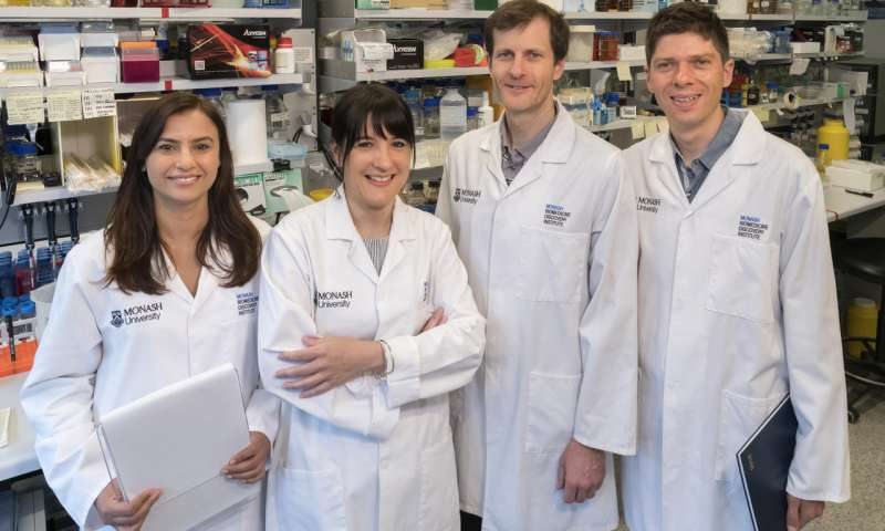 Monash study exposes key tactic used by deadly fungus