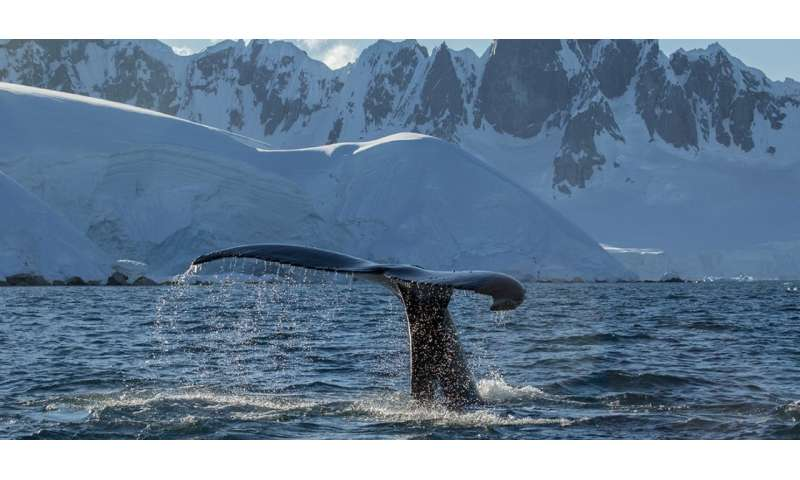 Monitoring bacteria on whale skin