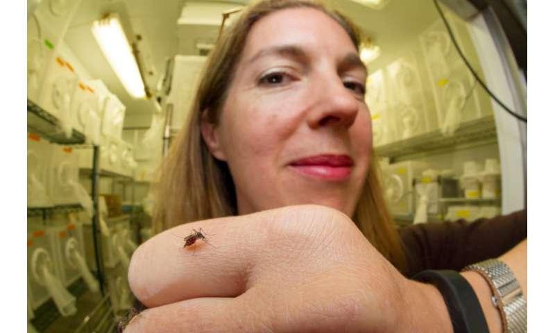 Mosquito brain atlas aims to reveal neural circuitry of behavior