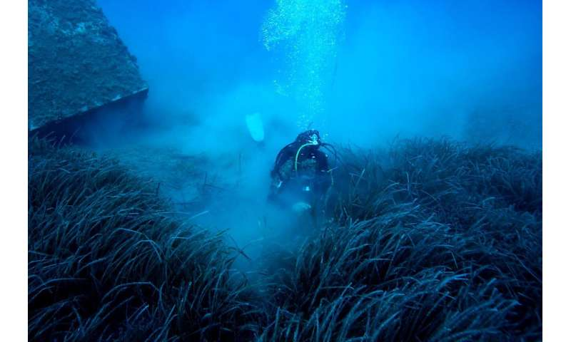 Moving fish farms enables seagrass meadows to thrive, study shows